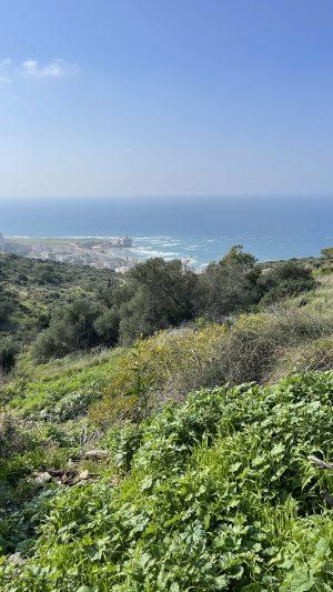 נוף חיפה הר הכרמל וחוף הים סטלה מאריס