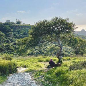עץ פיקניק סטלה מאריס חיפה