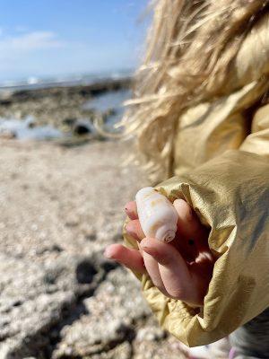 איסוף צדפים בחוף שקמונה