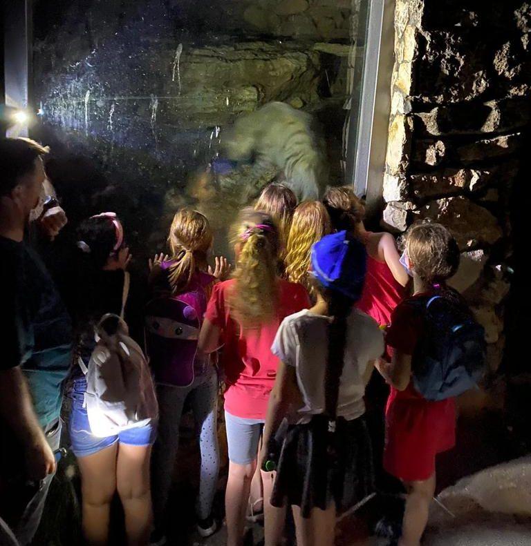 חופשה עם ילדים בחיפה: ספארי לילה גן החיות הלימודי חיפה