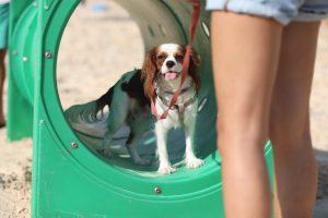 מתקן שעשועים לכלבים חוף הכלבים חיפה