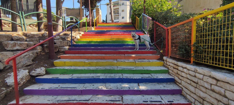 טיול בחיפה עם כלבים 10