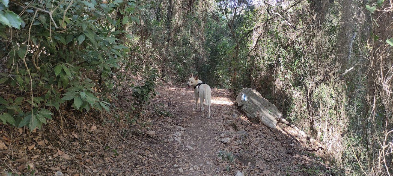 טיול בחיפה עם כלבים 11