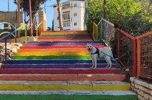 כלב עומד על מדרגות גן האם בחיפה