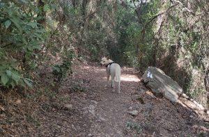 כלב בטיול ביער בחיפה
